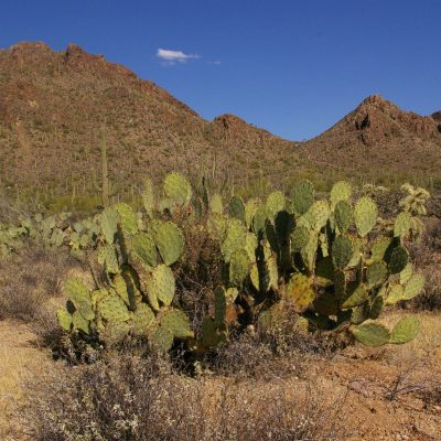 Writing Lesson: Is This Tucson…? Or Is This…?